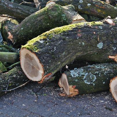 abattages des arbres dans les hauts de france