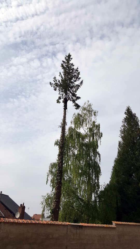 abattage arbres hauts de france