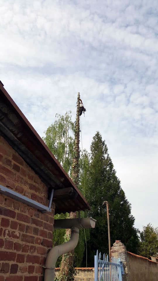 abattage démontage d'un arbre dangereux