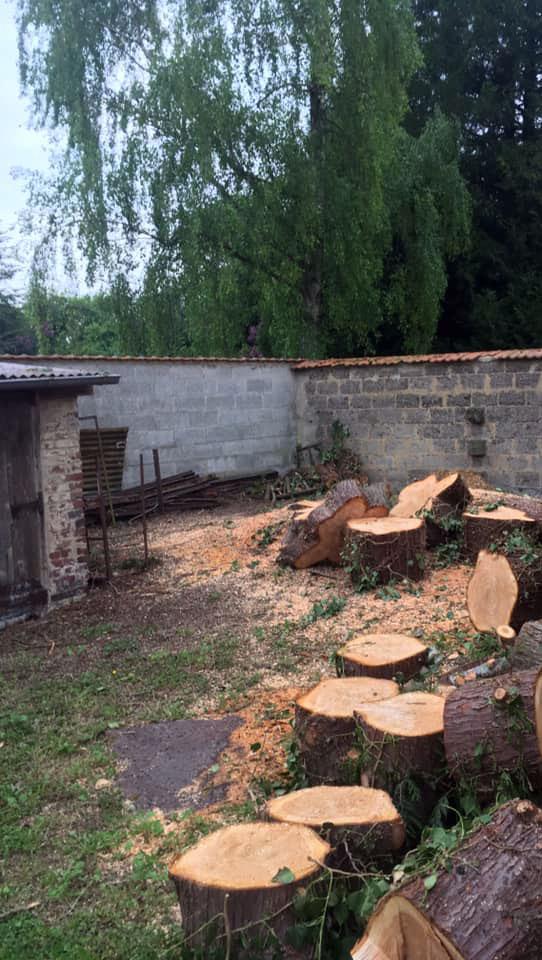 Abattage arbres pas de calais